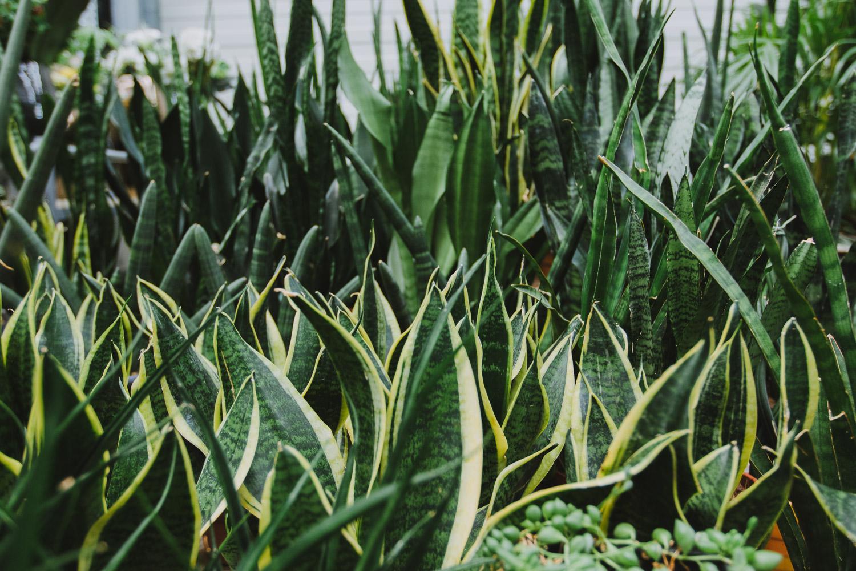 TOP 10 rastlín, ktoré čistia vzduch
