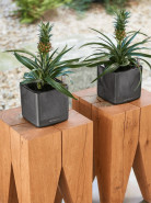 Lechuza Cube Glossy 14 All inclusive set charcoal hugh-gloss 14x14x14 cm