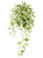 Tradescantia hanging bush 70 cm