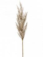 Grass pampas Branch cream 115 cm