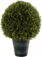 Boxwood Ball in plastic pot (UV res.) pot.27cm 50x68 cm
