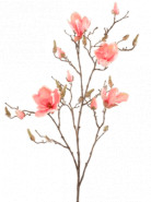 Magnolia Pink 105 cm