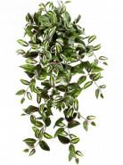 Wandering jew hanging bush (x12) 70 cm