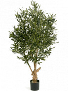 Natural twisted olive Tree