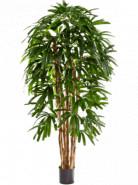 Rhapis palm tree 120 cm
