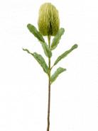 Umelá rastlina Banksia Branch zelená 65 cm