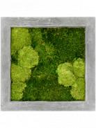 Moss painting grey 30% bobky, 70% plosky Machovy obraz beton 50x50x5 cm