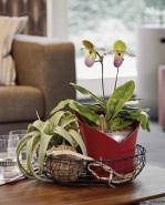 Lechuza Orchidea All inclusive set scarlet red matt 18x18x20 cm