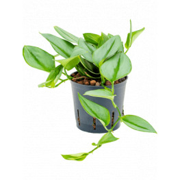 Philodendron metal green hanging 13/12 v.20 cm