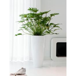 Fiberstone Glossy white dax L 37x80 cm
