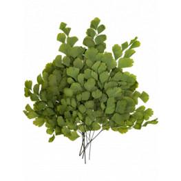 Stabilizovaná rastlina Adianthum Bunch (4pcs)