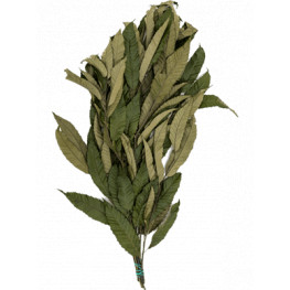 Chesnut bush 80 cm