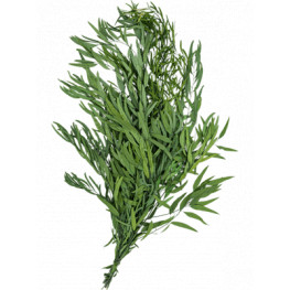 Nicoly bush 80 cm