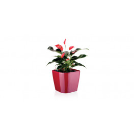 Tescoma samozavlažovací kvetináč SENSE