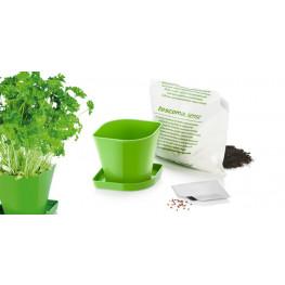 Tescoma súprava na pestovanie bylinek SENSE, petržlen