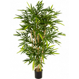 Bamboo bambus  - 150 cm