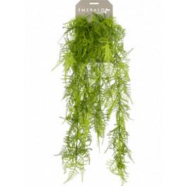 Asparagus plumosus hanging bush 65 cm