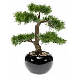 Bonsai cedar in pot black 34 cm