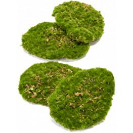 Moss plate 4Pcs./bag