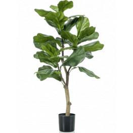 Ficus lyrata 45x90 cm