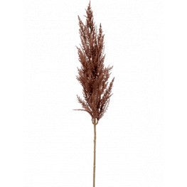 Grass pampas Branch brown 92 cm