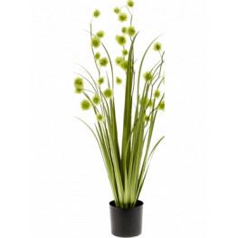 Grass pompom Green in plastic pot v.85 cm