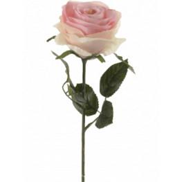 Rose Simone Pink (Ruza ruzova) 45 cm