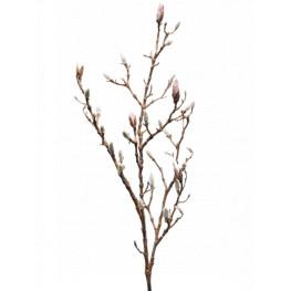 Magnolia W. bud lt. pink v.100cm