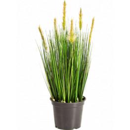 Grass foxtail green 60 cm