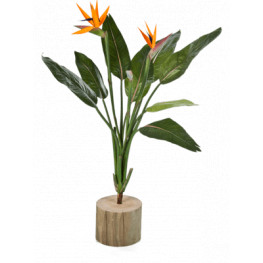 Strelitzia bush 100cm