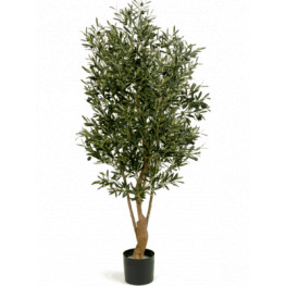 Natural twisted olive Tree 150 cm