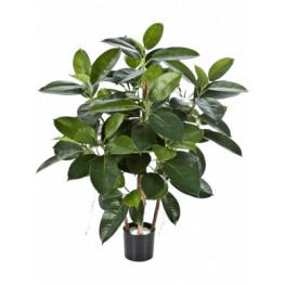 Ficus Elastica Rubber Plant 90 cm
