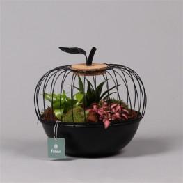 Aranžmán rastlín - rastlinné terárium (mini záhradka v kovovej nádobe jablko) 23x25 cm