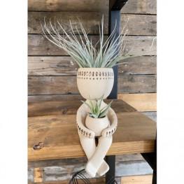 Aranžmán rastlina Tillandsia v kvetináči postava človeka 8x20 cm