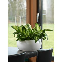 Kvetináč Cresta bowll Pure biely 28x13 cm