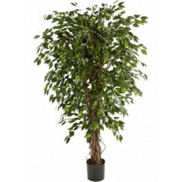 Umelý Fikus - Ficus exotica hawaiian liana branched 180 cm
