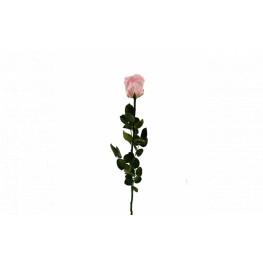 Dračeková ruža (stabilizovaná) ružová 55 cm