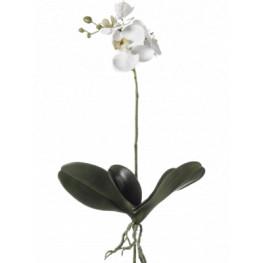 Umelá orchidea Phalaenopsis biela 55 cm
