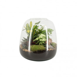 Aranžmán rastlín - rastlinné terárium (mini záhradka v skle) 23x30 cm