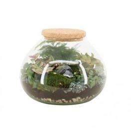 Aranžmán rastlín - rastlinné terárium (mini záhradka v skle) 25x30 cm