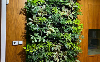 Ako využiť rastliny v interiéri