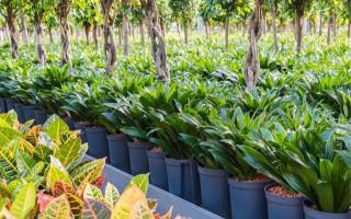 Hydroponické pestovanie a jeho výhody