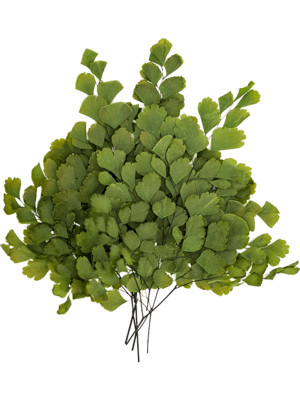 Stabilizované rastliny