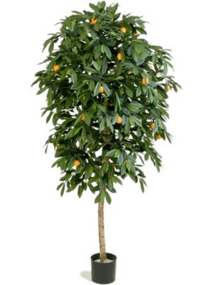 Citrus mandarine