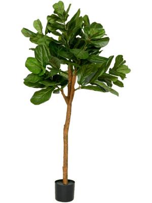 Ficus Lyrata umelá