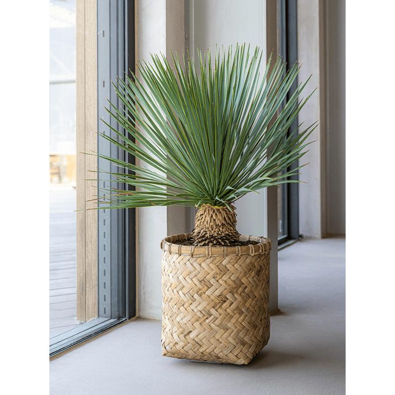 Bohemian Zayn Bamboo XXXS 32x33 cm