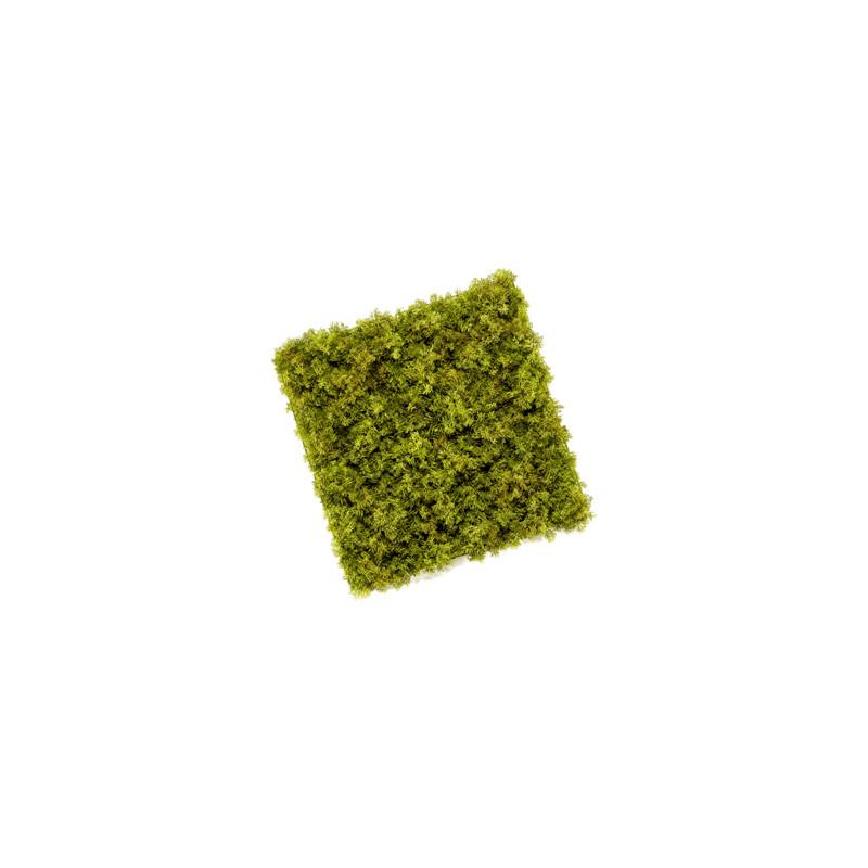 Moss mat weater 50x50 cm