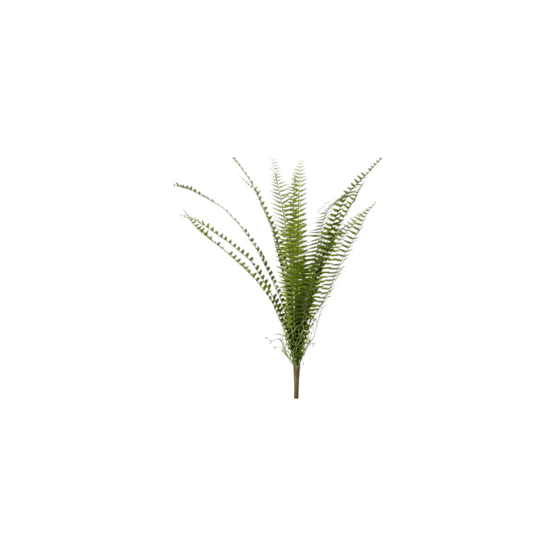 Fem nephrolepis bush green 60 cm