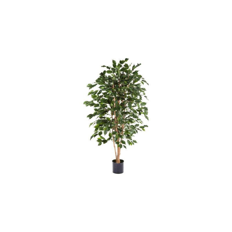 Ficus exotica150 cm