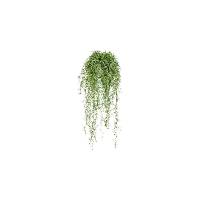 Long hair Bush green